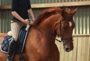 Horse for sale - HYGUM'S ROMINANT
