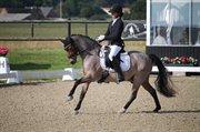 Horse for sale - DAHLSMINDE GO GO GADGET (DNK)
