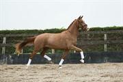 Horse for sale - Kyara V