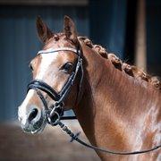 Horse for sale - NØRLUNDS SAVANNAH
