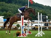 Hest til salg - CHEVAL