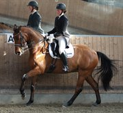 Horse for sale - PER