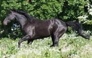 Horse for sale - DESTANIA
