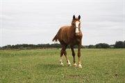 Horse for sale - MYOSOTIS RAVNBJERG