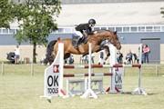 Horse for sale - MOSGAARDS HARD CASH