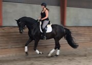 Horse for sale - PRIMULA