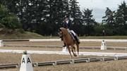 Horse for sale - LORAN