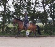 Horse for sale - SHIRLEY WONDER