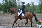 Horse for sale - WIAN