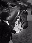 Horse for sale - BAKKEGÅRDENS LOU'Z