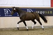 Horse for sale - HØJBO'S FLEUR DELACOUR