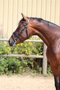 Horse for sale - FRED O'MAINE