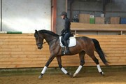 Horse for sale - SKOVGAARDENS LEONORA