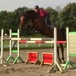 Hest til salg - Cato