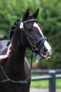 Horse for sale - REMONTES DUCHESS