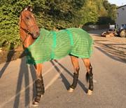 Hest til salg - Margot Fonteyn