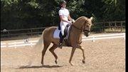 Hest til salg - Romeo´s Luxus