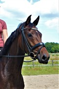 Horse for sale - MØLLEGÅRDENS ANEMONE
