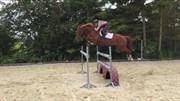 Horse for sale - NØRGAARDS CHAMPION