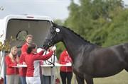 Horse for sale - KØLLEHØJS ADELFÜRSTIN
