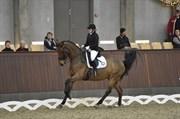 Horse for sale - CAPRI M