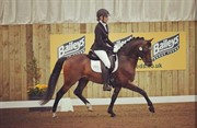 Horse for sale - BS Mr President
