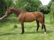 Horse for sale - Forest Gump