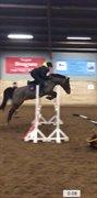Hest til salg - Dixie