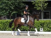 Horse for sale - Olina
