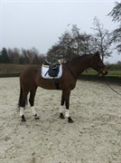 Horse for sale - DD ZACK'A'RO