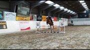 Horse for sale - HAVFOLDS HEART-BELL