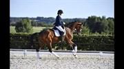 Horse for sale - BRUUNS ZELFIE