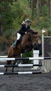 Horse for sale - STELLA NOVA