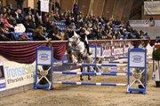 Horse for sale - KATRINEBJERGS LUIGI