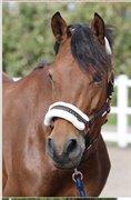 Horse for sale - BORREBJERG'S RAINDROP