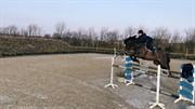 Horse for sale - AK'S NOBEL WINE