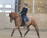 Horse for sale - VLADIA