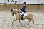 Horse for sale - RS PROUD MARY