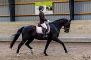 Hest til salg - Spring og Dressur