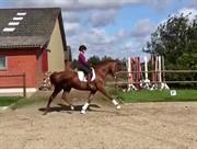 Horse for sale - MØLLEGÅRDENS KADEAU