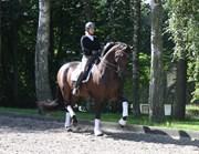 Horse for sale - ROLLO