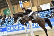 Horse for sale - CAPRENTO M (SWB)