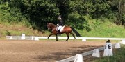 Horse for sale - AMK HOPKINS