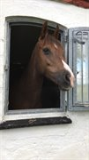 Horse for sale - ROZA'S PARADERA