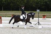 Horse for sale - LORENZO