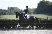 Horse for sale - SPRINGBORGS ACHIVA