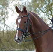 Hest til salg - CALISTA