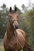 Horse for sale - MEJERIGÅRDENS MISS MARYLIN