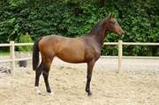 Horse for sale - First Love M