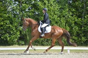 Horse for sale - DE´TOX ROYAL